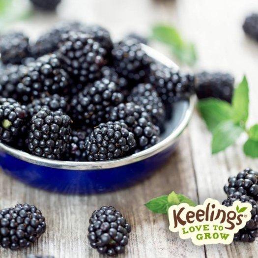 keelingsthimbleberry