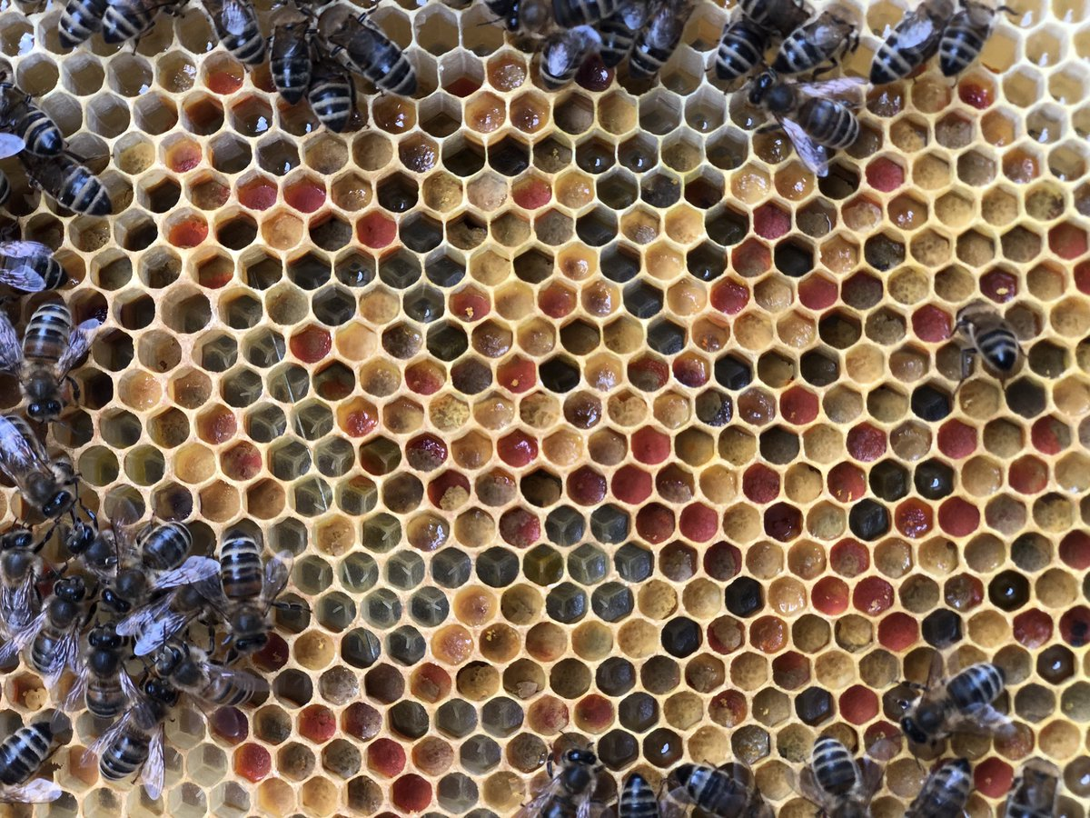 haughton bees honey
