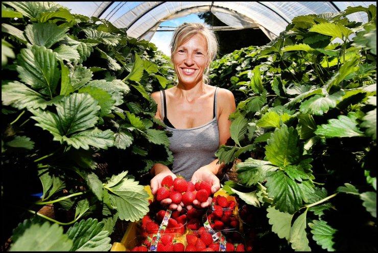 healthy ireland strawberries