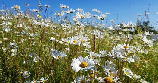 keelings wildflowers