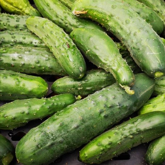 vp lodge cucumbers