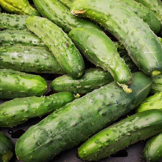 vp lodge cucumbers