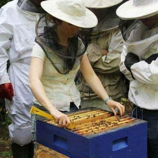 galtee honey farm