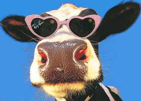 diageo-baileys-cow