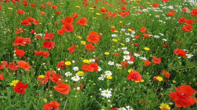 keelings wildflower wednesday