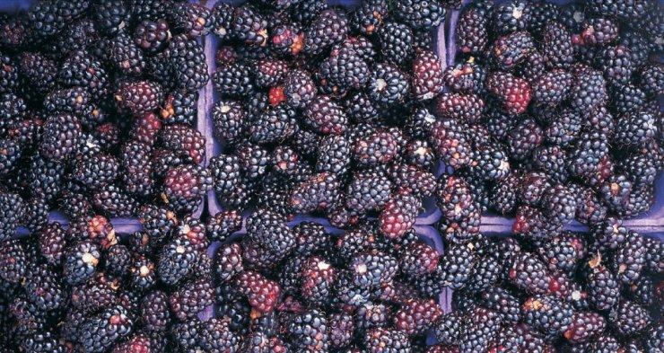 web md blackberries